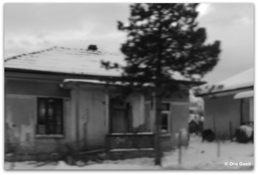 בית ועץ - מלחמת יום כיפור