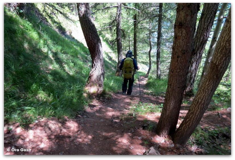ירידה ביער - טרק - סובב מון בלאן - יומן מסע