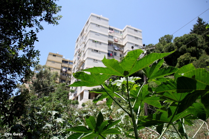 בתי העיר מבצבצים - נחל לטם - שביל חיפה - טרק - טיול בחיפה