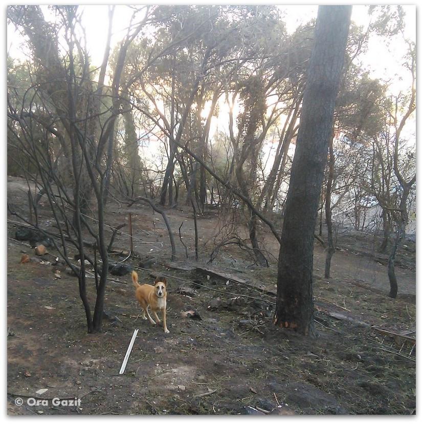 כל רץ ביער שרוף - שריפה בחיפה - היער השחור
