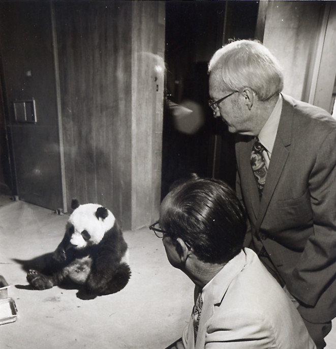 Claude Smith at National Zoo viewing giant panda Ling-Ling in 1972