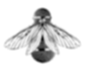 Firefly 1Artboard 2PNG.png