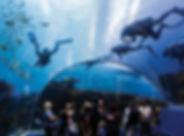 0117_aquarium02_oneuseonly.jpg