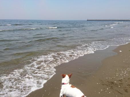 海に行ってきたーーー♪