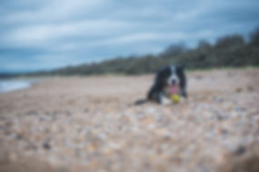 Pet Photography, Beach