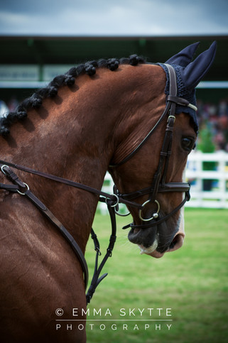 Show jumping - Falsterbo