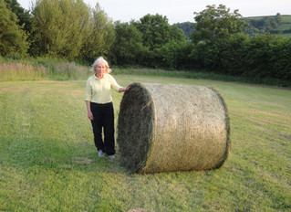 July 2013: Haymaking, International visitors, Royal Welsh Show