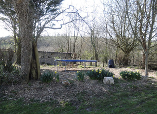 July 2015: Visitors and new trampoline