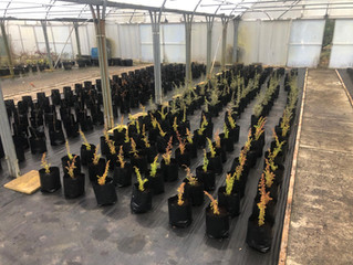 February 2021: Polytunnel Refresh and Restock