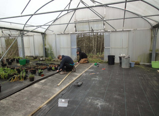 January2016: Polytunnel Repair and cleanup