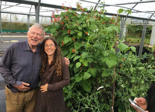 June 2016 - Abundance of Vegetables