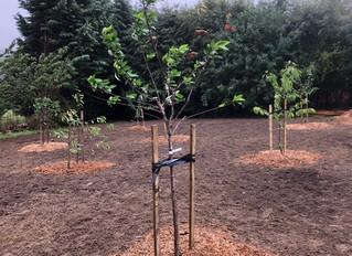 August 2018: Tree planting
