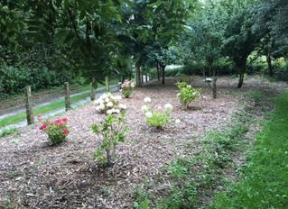 July 2016 - New Hydrangea Garden