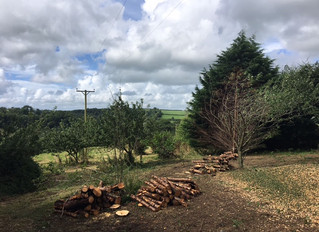 August 2017: Bramble and leylandii clearing