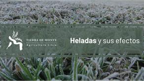 Heladas: Efectos y soluciones