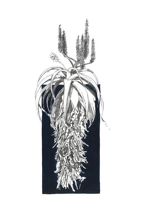 """""""Ink"""" Scarlet Aloe A4 (unframed)"""
