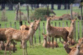 deer-4573101_1280.jpg