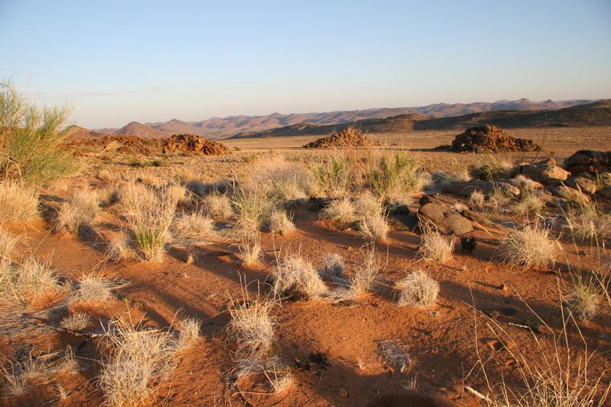 Semi Desert