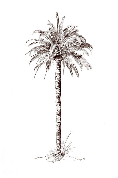 King Palm (unframed) A3