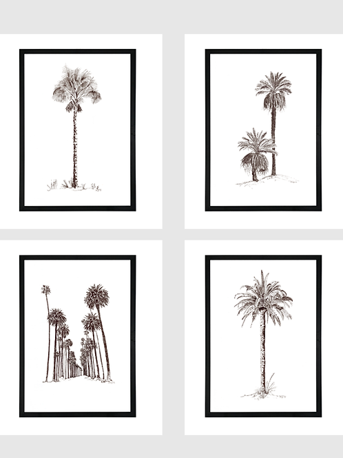Set of 4 - A1 Pen & Ink Palms in Black Birch Ply Frame