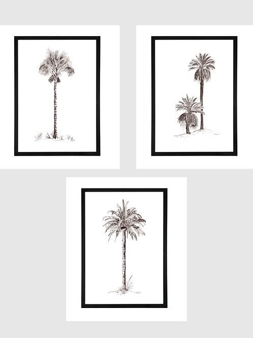 Set of 3 - A1 Pen & Ink Palms in Black Birch Ply Frame