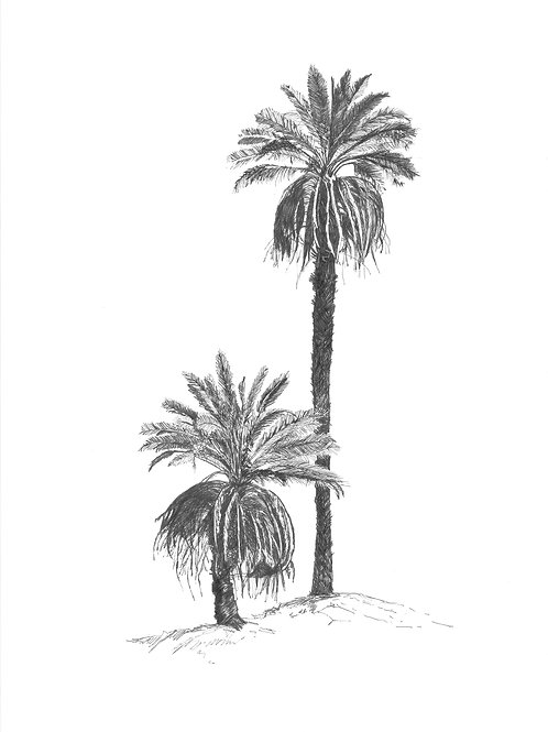 Desert Palm (unframed)