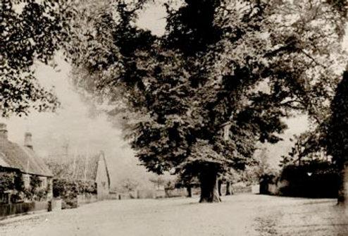 The Green, Cross Tree and Blackamoors Head