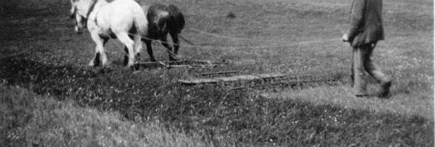 Horse Harrowing