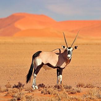 Sandfontein_Oryx_edited.jpg