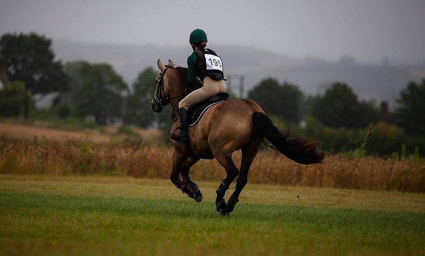 horse-4372626_1920.jpg