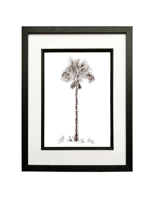 Date Palm in Black Box Frame
