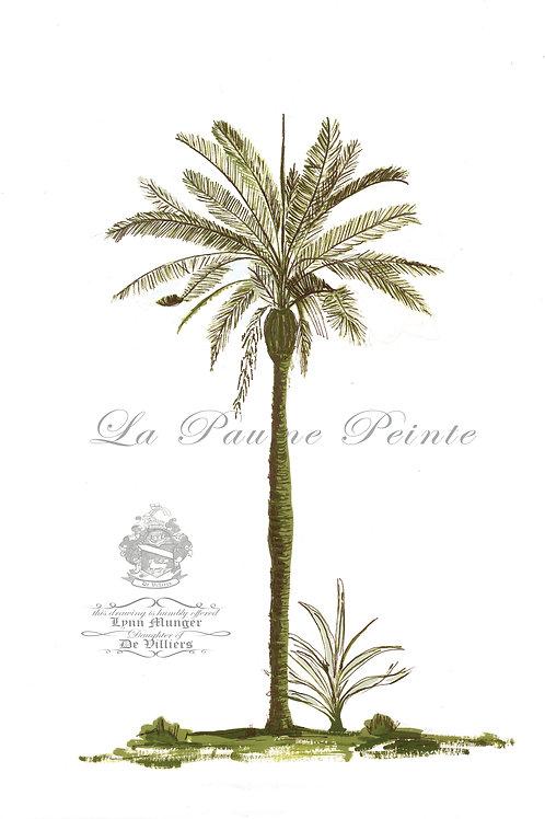Betel Palm Print (A3)
