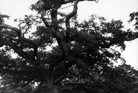 Old Oak, Eydon Hall
