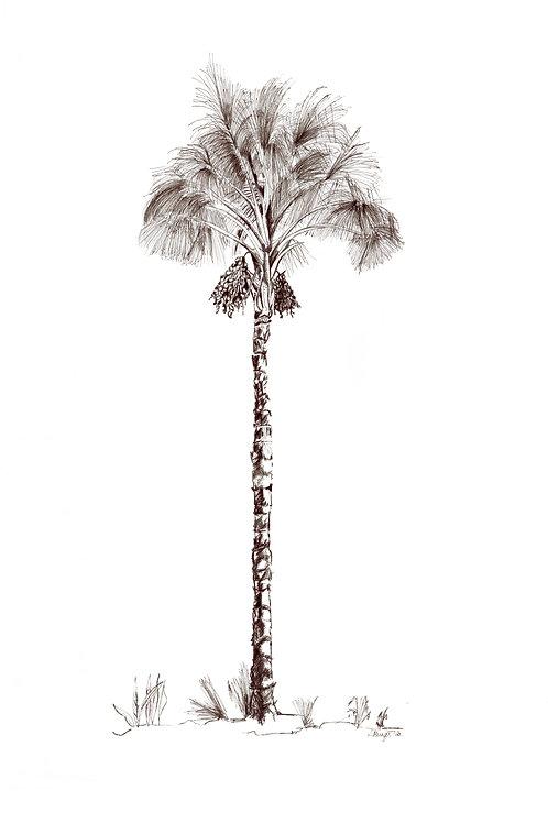 Date Palm (unframed) A3