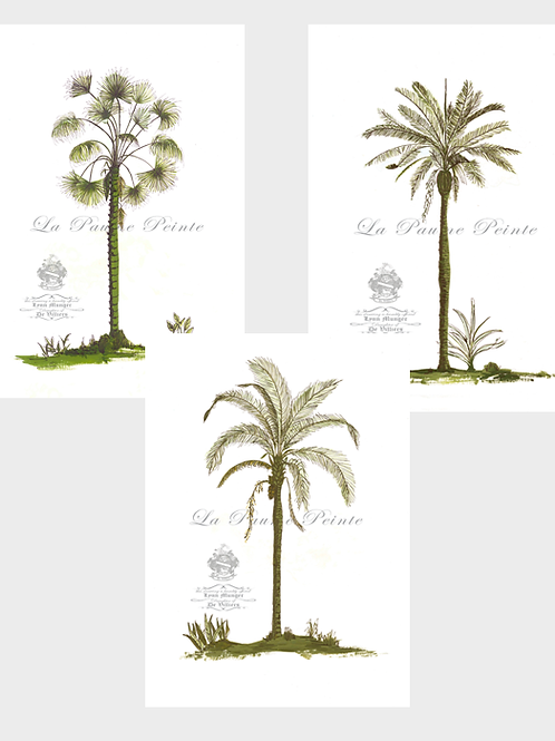 Set of 3 Classic Palm Prints (A3, Unmounted)