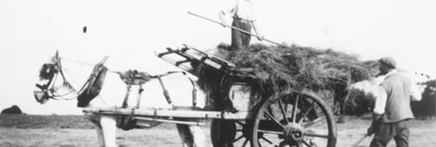 Horse Drawn Hay Making