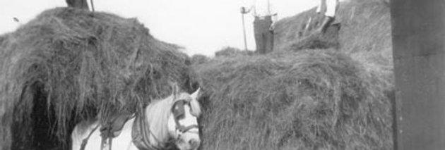 Making the Hay Stacks