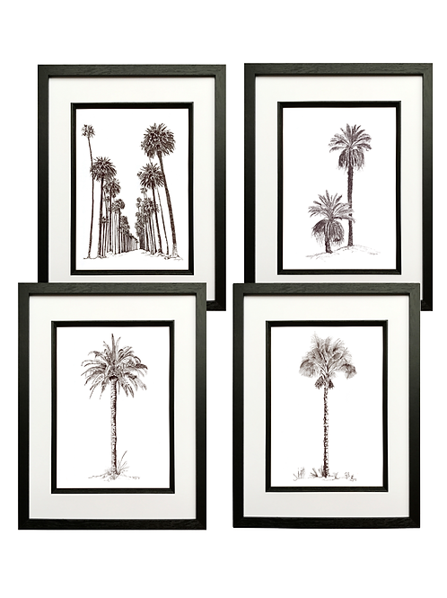 Set of 4 Pen & Ink Palms (A3) in Black Box Frame