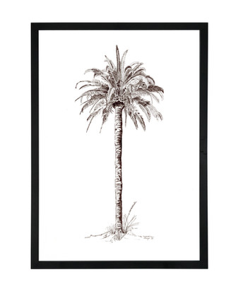 King Palm A1 Black Birch Frame.jpg