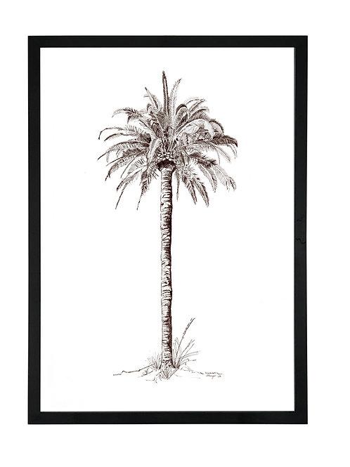 King Palm in Black Birch Ply