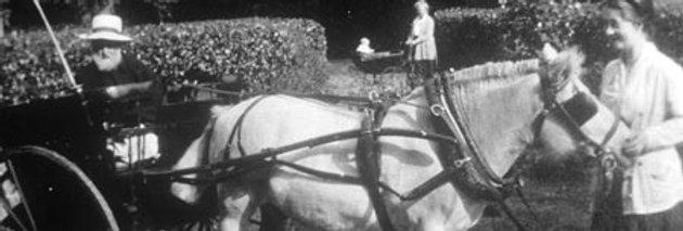 Rev. William Lewis in his Dog-Cart,  c1920