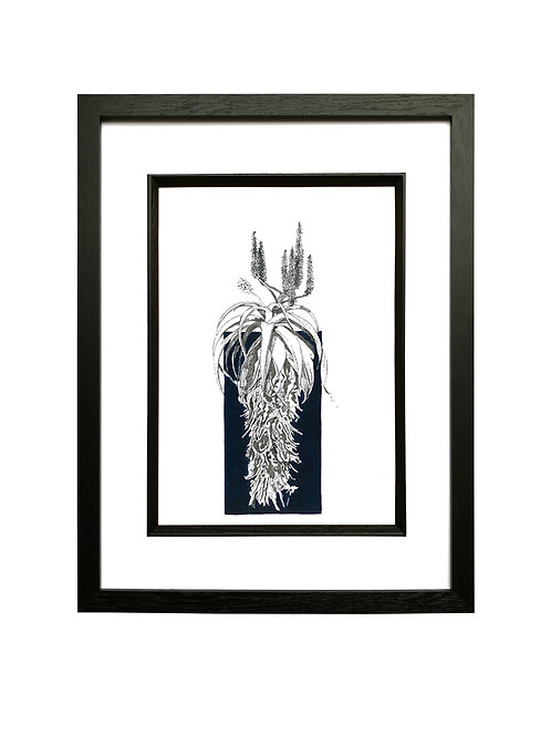 """""""Ink"""" Scarlet Aloe A4 in Black Box Frame"""