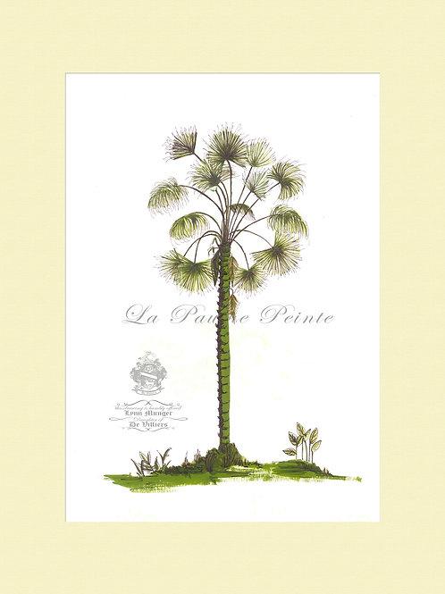 Fan Palm Mounted Print (A3)