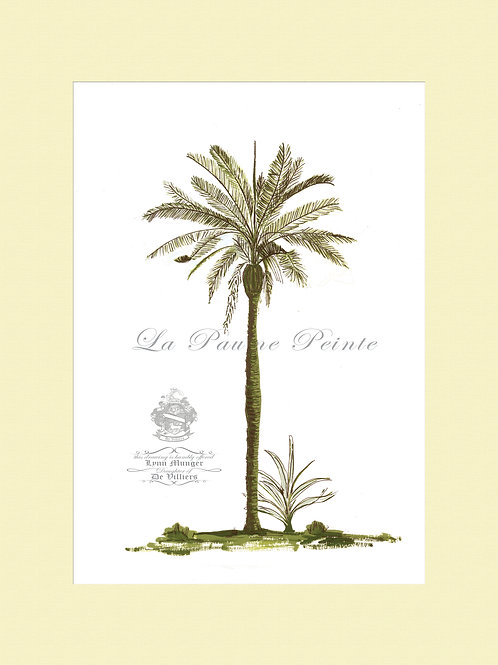 Betel Palm Mounted Print (A3)