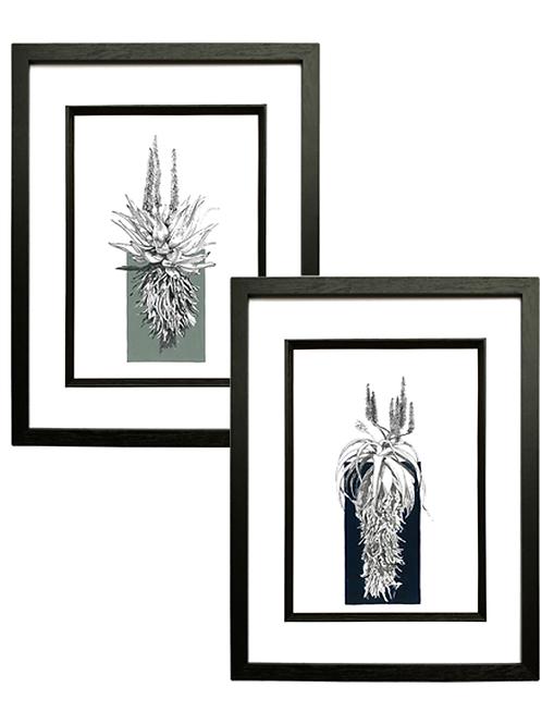 Set of 2 Aloe A4 Prints in Black Box Frame