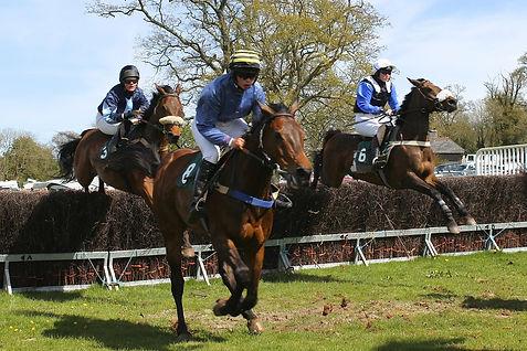 horses-283427_1280.jpg