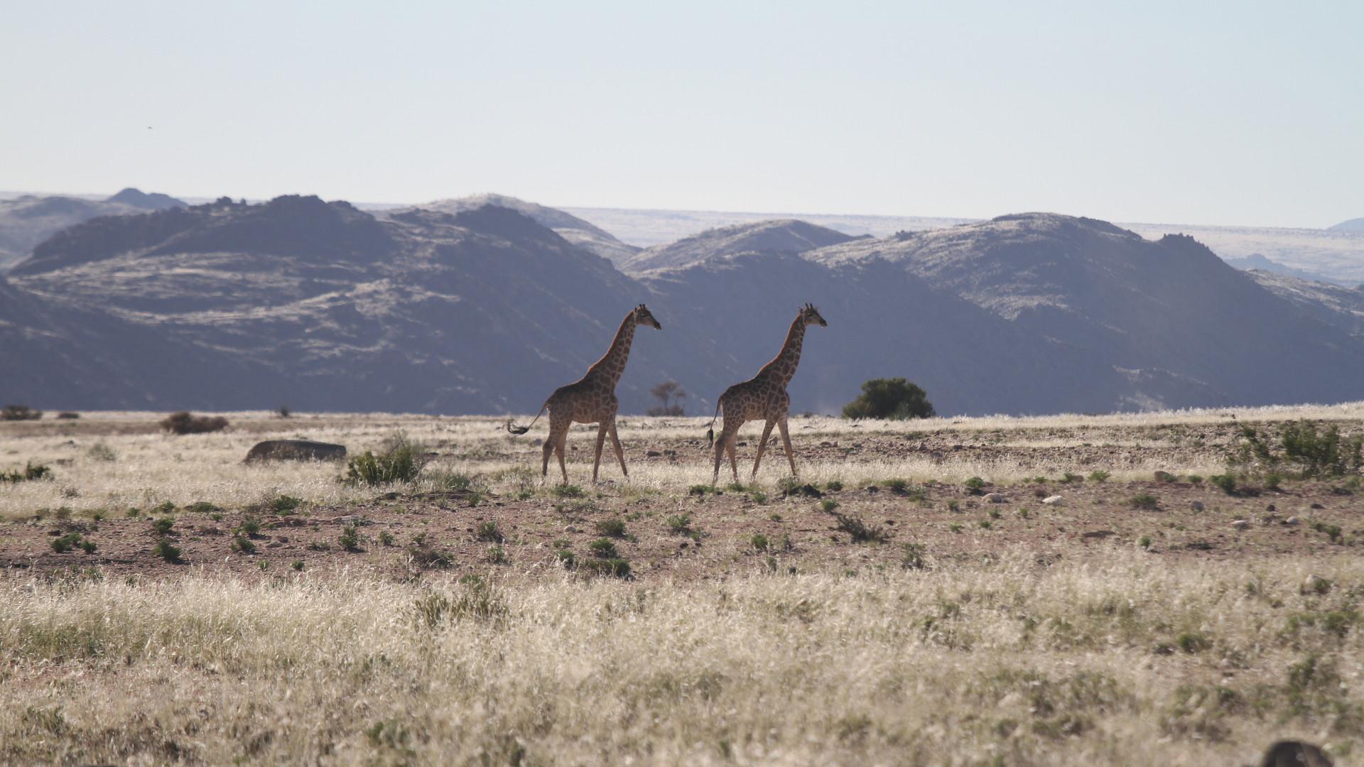 20 Sandfontein.jpg