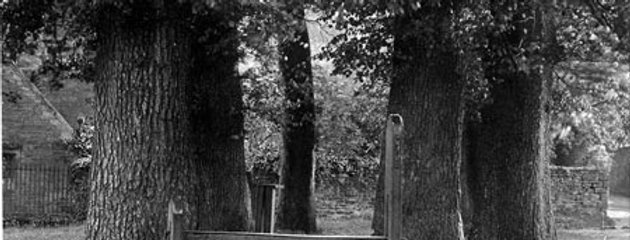 Trees and Stocks on The Green