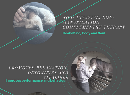 Reiki Healing for Animals the  info-graphics
