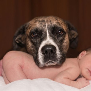 Reiki with animals and babies, why it works so well.